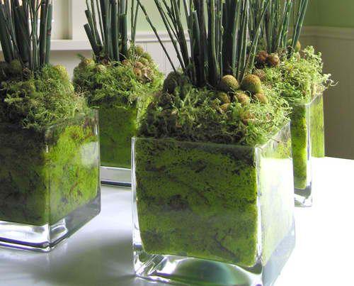 Mech w szklanych doniczkach. Foto źródło: https://pl.pinterest.com/explore/moss-centerpieces/
