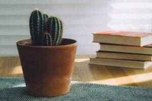książka roślina fotografia blog czytam książki kącik do czytania