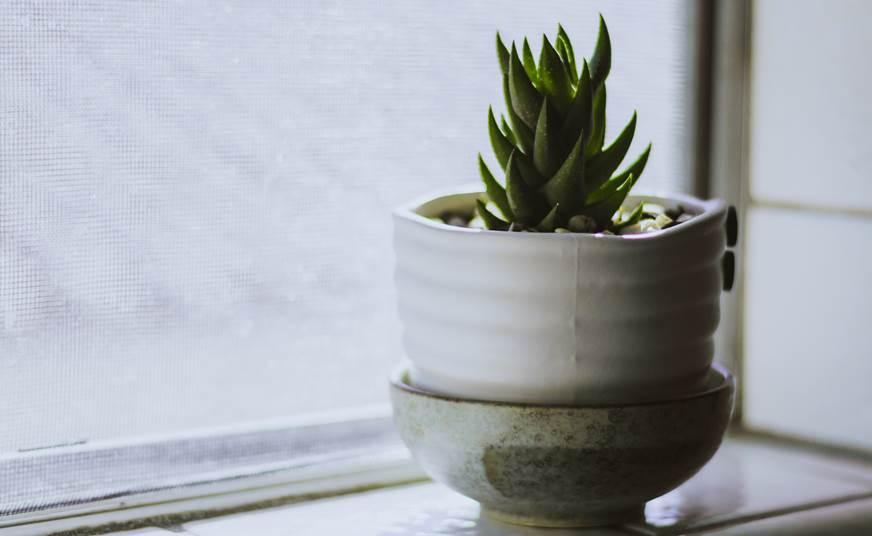 doniczka ceramika kwiat wabi - sabi blog o nowych trendach w aranżacji wnętrz co to jest wabi - sabi projektant wnętrz architekt aranżacja